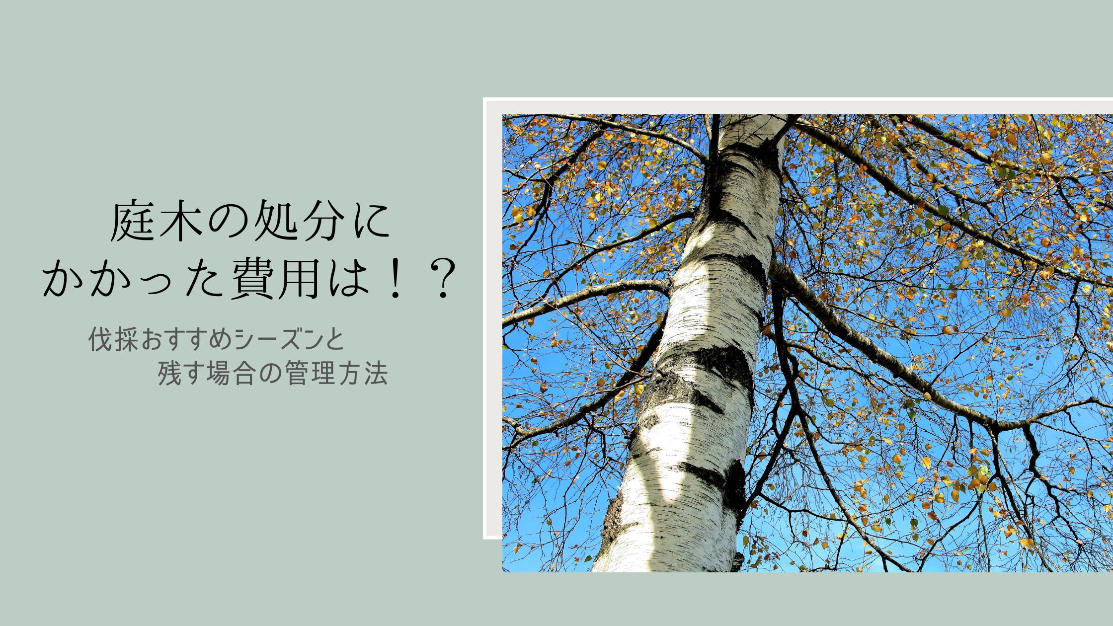 庭木の処分にかかった費用は!?伐採おすすめシーズンと残す場合の管理方法